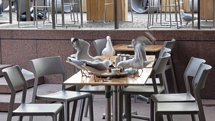 A group of seagulls fighting for leftover food | Shutterstock HD Video #1031087636