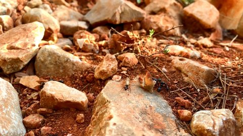 Some ants carrying leaves and seeds to their anthill