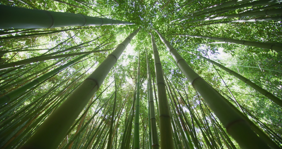 Top view of scenic bamboo forest used as renewable sustainable energy resource and different  types of eco -friendly green products. | Shutterstock HD Video #1032601886