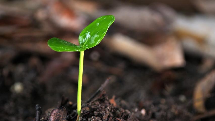 young plant leave branch and rain water drop falling rainy season, tropical leaf rain drops. #1032652136