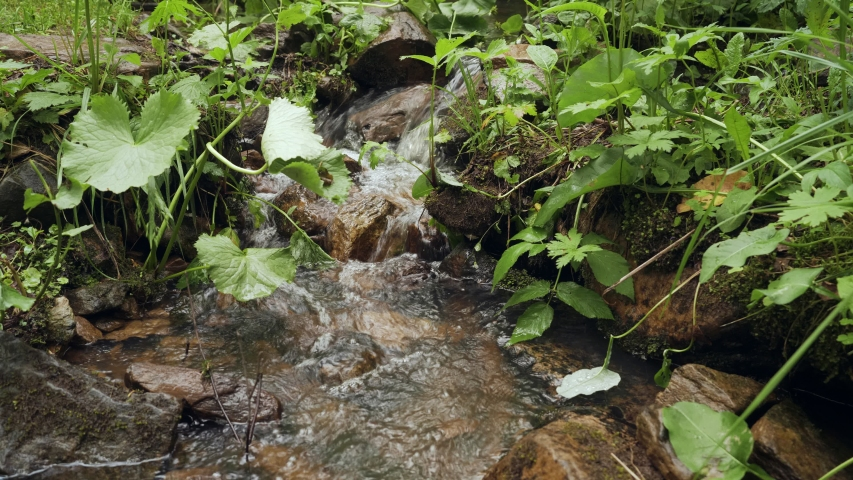 Close-up small cascading stream with lush green vegetation in the forest.   Shutterstock HD Video #1032810146
