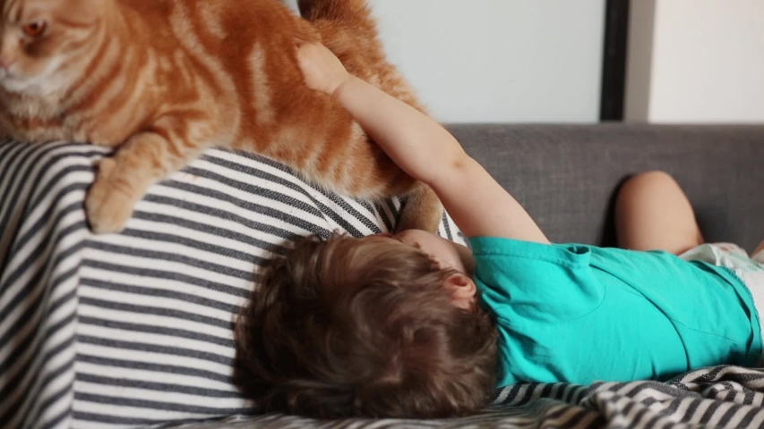 Little toddler boy play with a Scottish fold cat  | Shutterstock HD Video #1032885206