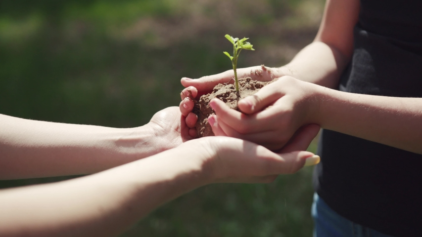 Young family planting trees in the green park on sunny day. close-up cute view of sisters holding a young plant in hands together. ecology and nature concept.   Shutterstock HD Video #1033141826