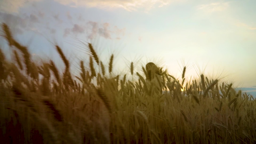 Low angle shot of happy young woman running on wheat field at sunset | Shutterstock HD Video #1034785016