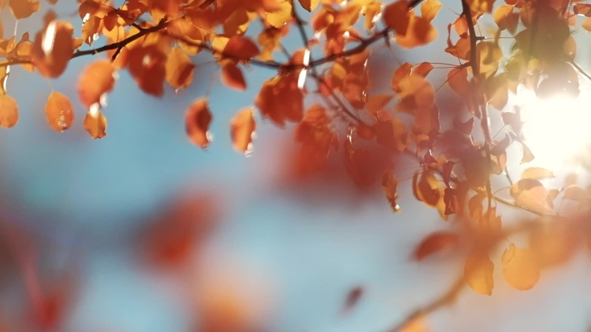 Autumn forest beauty. Golden tree leaves. Sun beam. Blue sky. | Shutterstock HD Video #1034944016