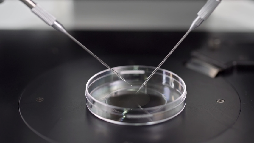 Petri Dish and moving micromanipulators over it in the laboratory of the in vitro fertilization. Closeup video recording with selective focus.