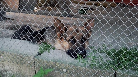 The sad dog lies on the ground in a cage. German Shepherd. He turns his head to the side. View through a metal grid.