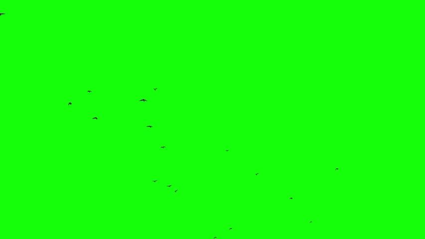 Flock of birds flying speed green screen clear | Shutterstock HD Video #1035514526