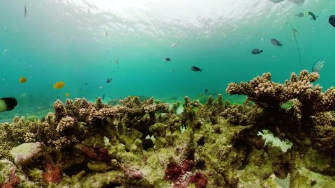 Underwater fish reef marine, 360 panorama. Tropical colorful underwater seascape with coral reef. Camiguin, Philippines.