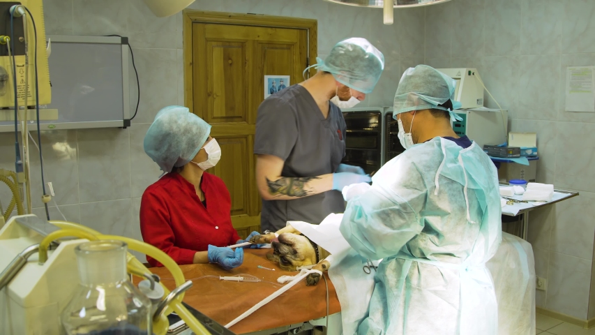 Veterinary with electrocoagulator make surgery for dog in the operating room of a veterinary clinic. Vets doing surgery in the clinic. Medicine, pet, animals, health care and people concept. | Shutterstock HD Video #1035983036