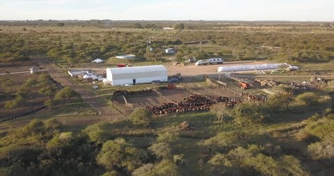 Aerial view of a cattle feedlot with the sunset in the background, Entre rios, Argentina.