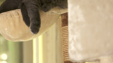 Gray cat resting in hammock at the top of cat tree tower in living room.
