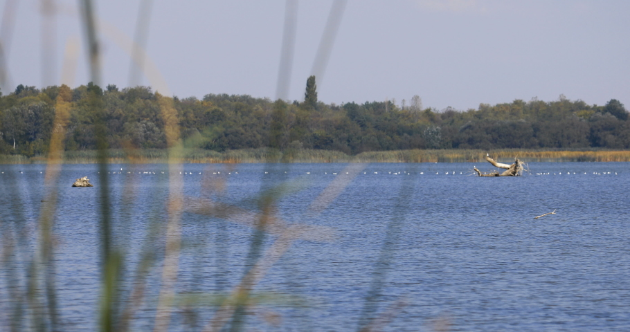 View of a lake full of birds on the water through the bar reed | Shutterstock HD Video #1037210426