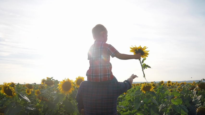 Happy family concept father's day lifestyle slow motion video.father and son walk on the field of sunflowers farmers funny funny video. happy family dad man rolls around the a neck of little boy son   Shutterstock HD Video #1037217956