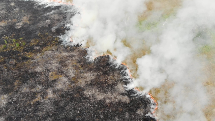 Epic aerial view of smoking wild fire. Large smoke clouds and fire spread. Forest and tropical jungle deforestation. Amazon and siberian wildfires. Dry grass burning in the field, drone footage | Shutterstock HD Video #1037336816