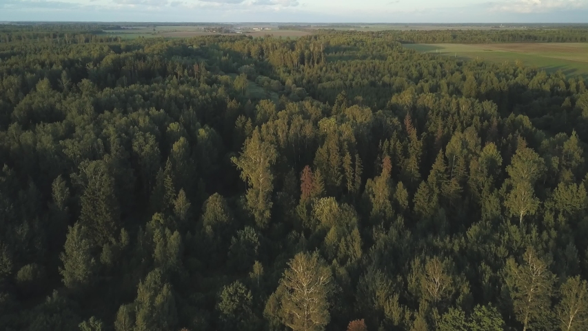 Aerial view of forest at the start of autumn | Shutterstock HD Video #1037342006