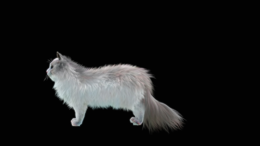 Cat CG fur 3d rendering animal realistic CGI VFX Animation Loop  composition 3d mapping cartoon, with Alpha matte | Shutterstock HD Video #1038316046
