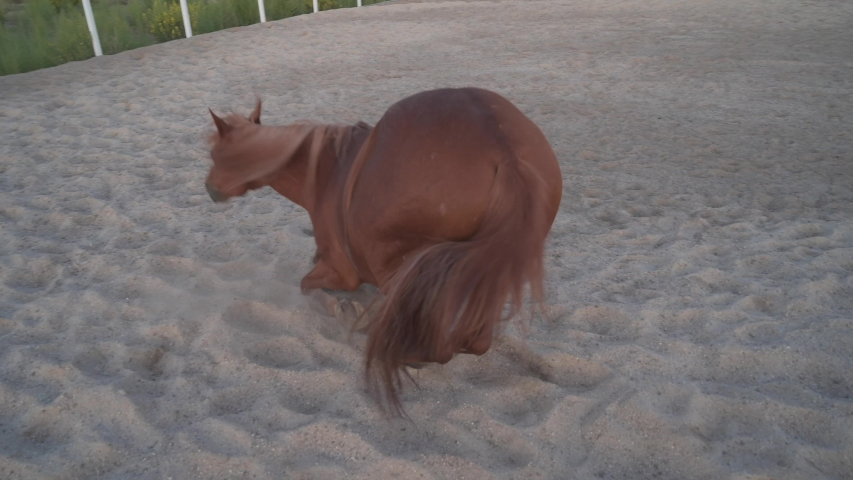 Horse rolling on sand of paddock | Shutterstock HD Video #1038741686