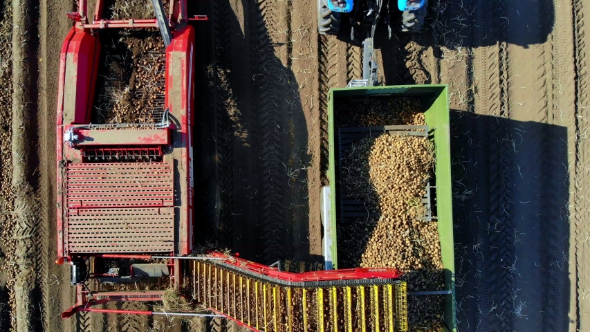 Top view, aero. Useing machinery at farm field during potatoe harvesting . Potatoe picking machine digs and picks potatoes, unloading crop into back of truck. warm autumn day | Shutterstock HD Video #1038773726