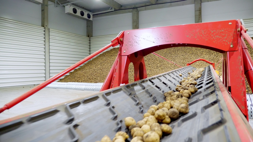 Close-up, Potatoes move on special conveyor machinery belt and fit into a storage room, a warehouse for winter storage. potato harvesting, crop | Shutterstock HD Video #1038773906