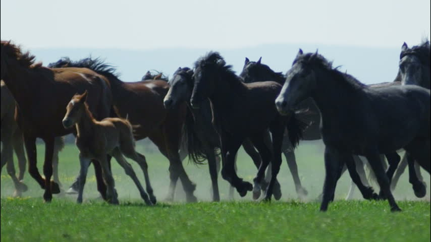 Herd of horses speeding through the desert in slow motion | Shutterstock HD Video #10389566