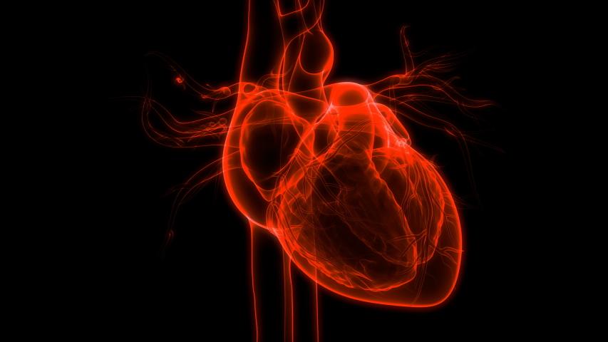 Human Heart beat Anatomy. 3D   Shutterstock HD Video #1040043866