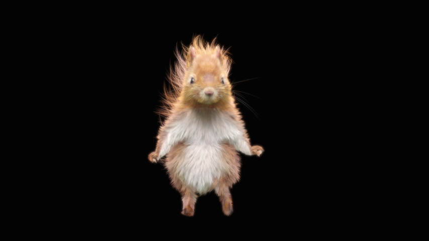 Squirrel Dance CG fur 3d rendering animal realistic CGI VFX Animation Loop  composition 3d mapping cartoon, with Alpha matte | Shutterstock HD Video #1040350946