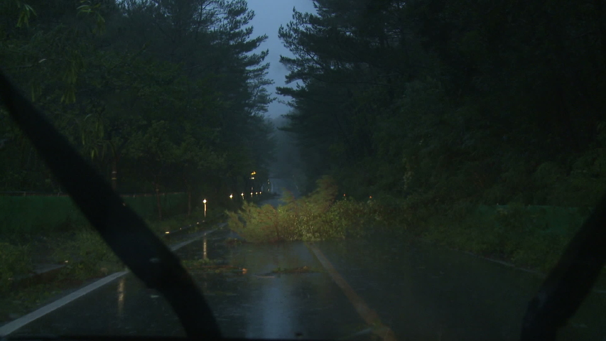 Tree Blocks Road After Hurricane Hits With Strong Wind - Danas