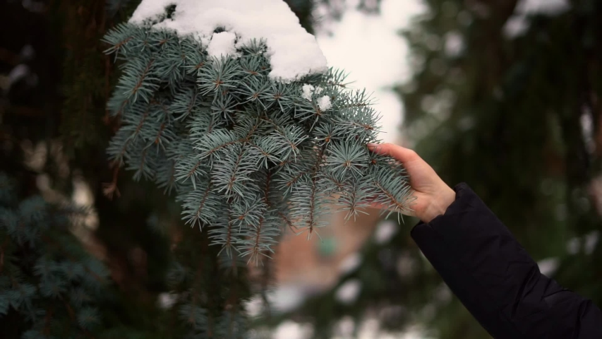 Slow motion of hand shaking the pine branch with snow. Holiday season in December | Shutterstock HD Video #1042371946
