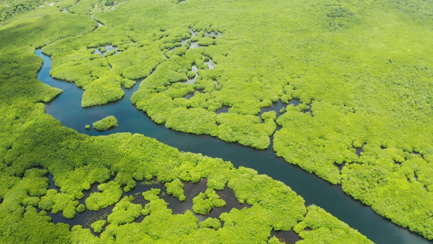 Tropical forest with mangrove trees, the view from the top. Mangroves and rivers. Tropical landscape in a deserted area. | Shutterstock HD Video #1043444176