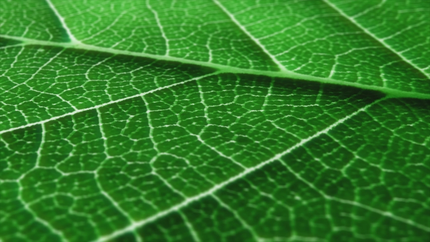 Macro shot of leaf, texture footage. Organic plant and leaf's vein with pan movement.  | Shutterstock HD Video #1043481976