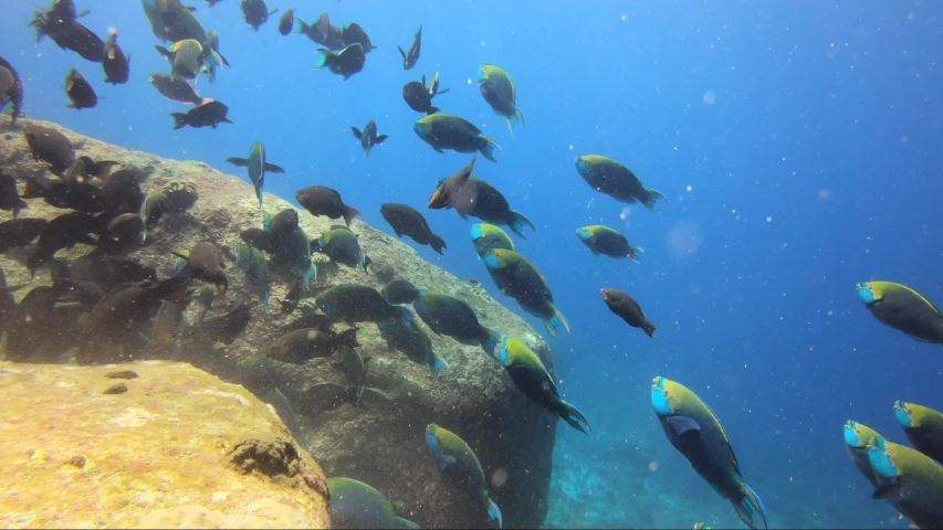 School of feeding parrot fish swim away in lovely sun rays | Shutterstock HD Video #1044770296