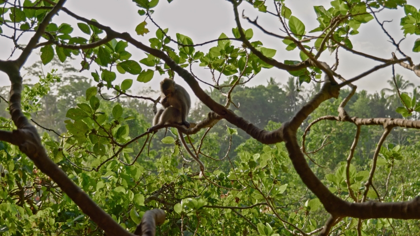 Visiting monkey forest at Ubud, Bali | Shutterstock HD Video #1044792616