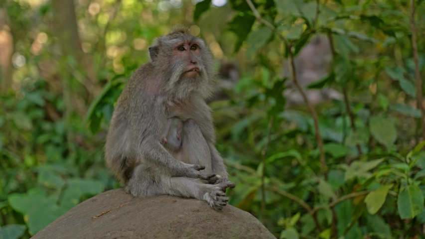 Visiting monkey forest at Ubud, Bali | Shutterstock HD Video #1044792646