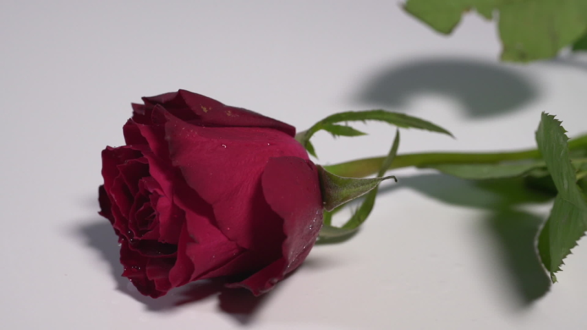 Slow motion of a red rose falling onto a white surface splashing dew  | Shutterstock HD Video #1044919276