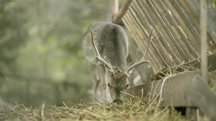 Deer eats from a feeding trough in the forest | Shutterstock HD Video #1045737496