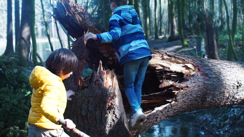Two brothers climb a fallen tree in the forest. Spending leisure time during social isolation COVID 19. Children's adventures. Home school in the forest. | Shutterstock HD Video #1049755666
