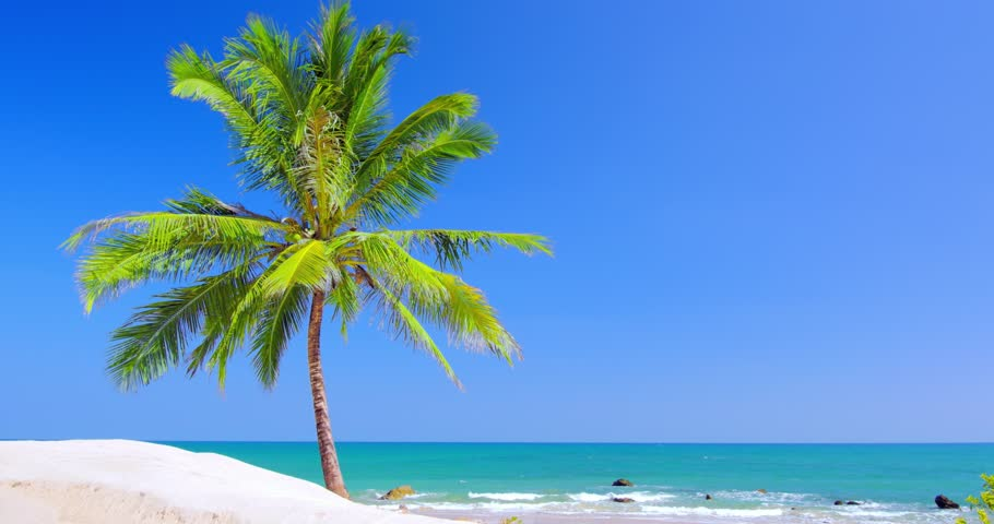 Hd Tropical Island Beach Paradise Wallpapers And Backgrounds: Caribbean Tulum White Sand Beach With Two Palm Trees And