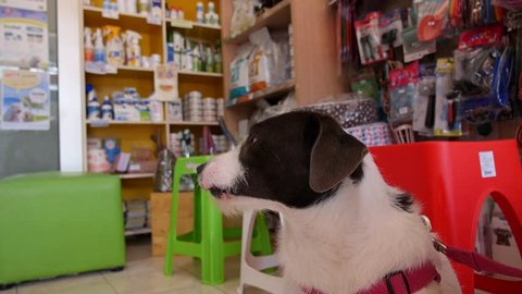 Happy Dog Shopping in Pet Shop with Pets Supplies. HD, 1920x1080.