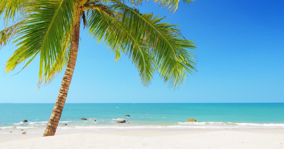 Tropical island vacation idyllic background. Exotic sandy beach and palm tree on sea coast at sunny day with blue sky. Tranquil summer scene