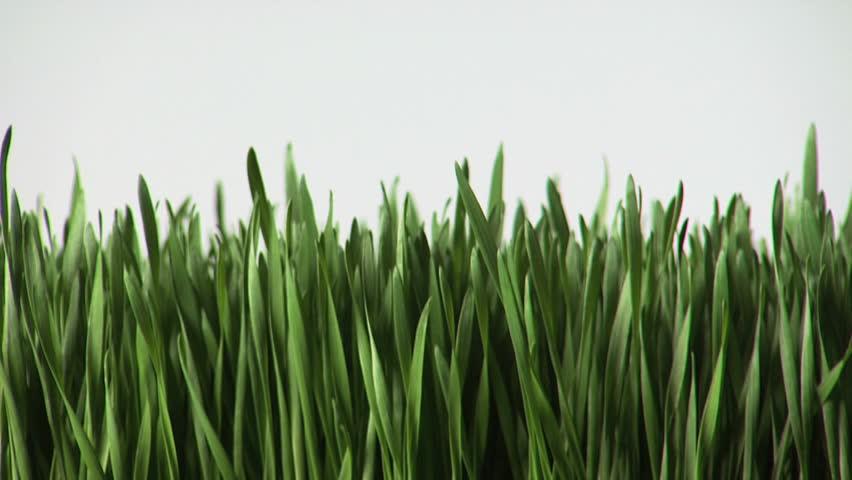 Header of wheatgrass