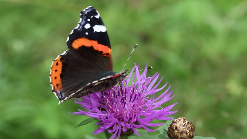 Beautiful Butterfly Video 29