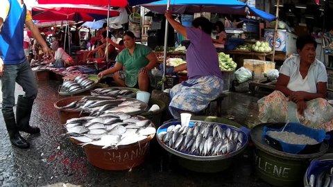 LAGUNA, PHILIPPINES - JULY 16, 2015: Bangus milkfish sold at street wet market due to lack of market facilities