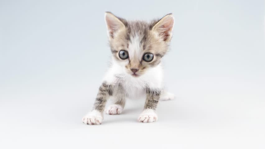 Small kitten moving to camera and meows | Shutterstock HD Video #10876346