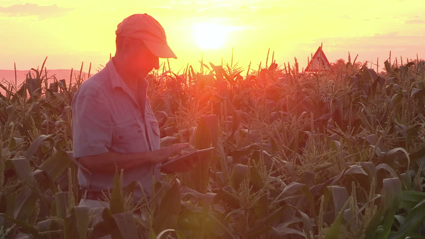 Backlit view of farmer checking progress of corn fields with digital tablet  | Shutterstock HD Video #10896266
