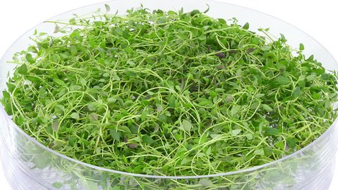 Time-lapse of drying (dehydrating) thyme (Thymus vulgaris) herb 1a2 in UHD 4K format