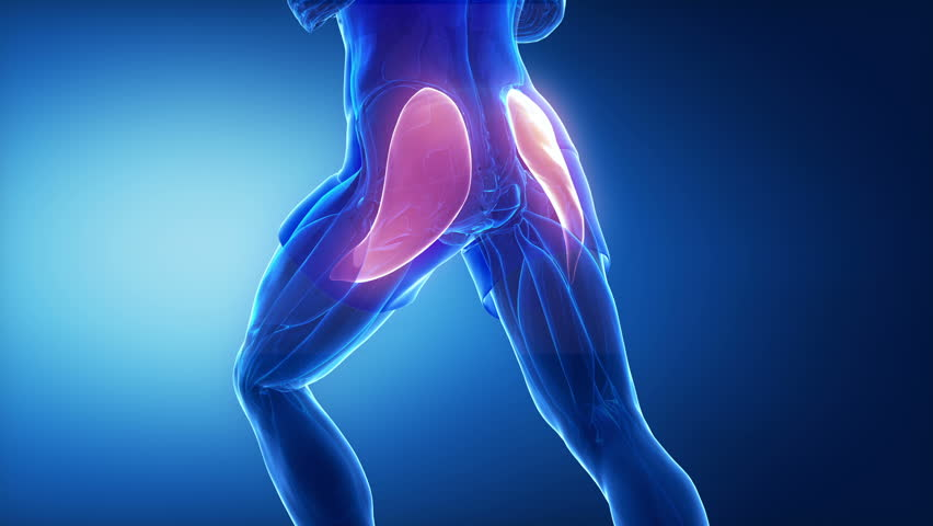 Gluteus Maximus - Leg Muscles Stock Footage Video (100% Royalty-free ...