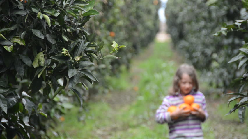 girl walks into focus along a row of orange trees carrying an armful of oranges