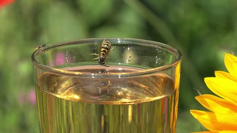 wasps on glass with apple juice in nature