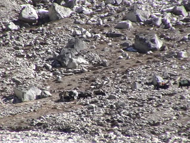 Tele shot of Yaks and porters on the rugged trail to Everest base camp, Nepal